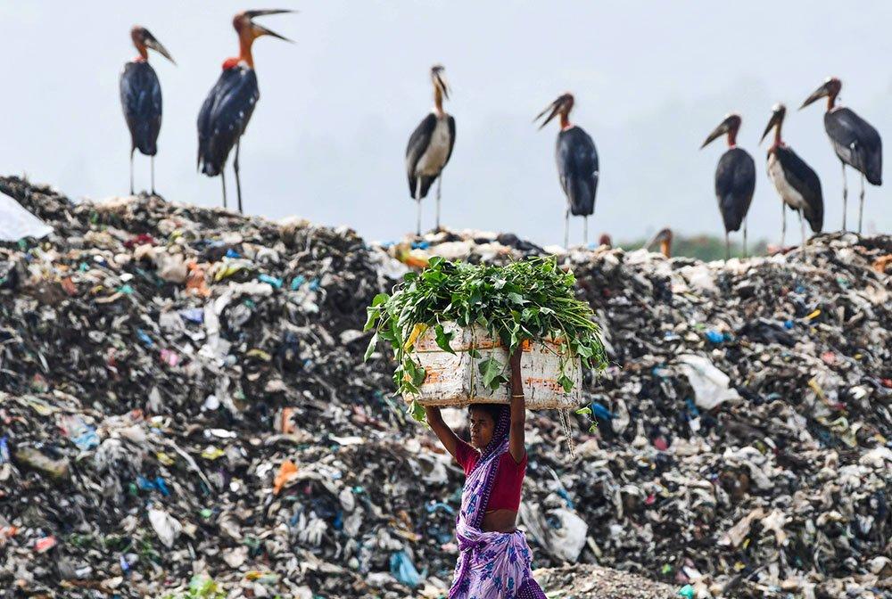 Žena nosi hranu za stoku prolazeći pored jata roda koje stoje na planini đubreta