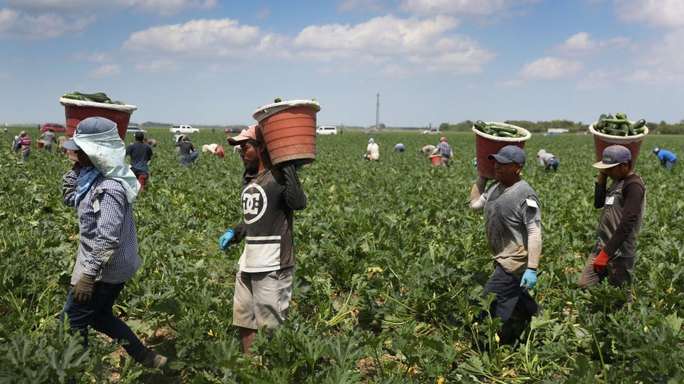 Essential farm workers bringing in crops in the US during the coronavirus pandemic.