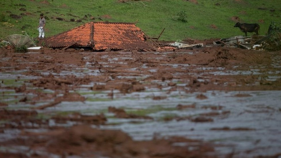 Usamljeni čovek i krava se vide pored potopljene kuće nakon kolapsa brane u Minas Žeraisu u Brazilu, januar 2019.