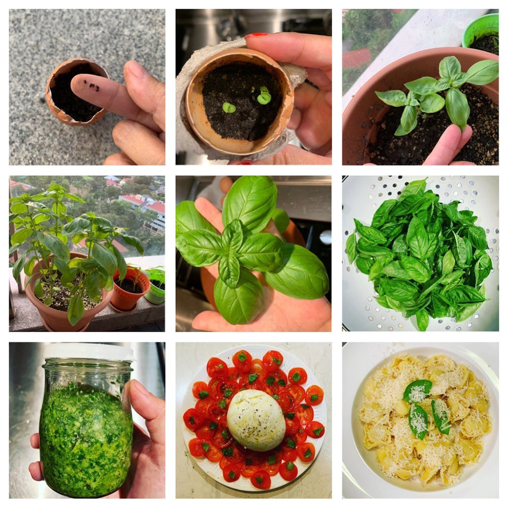 A mixture of seeds and plants