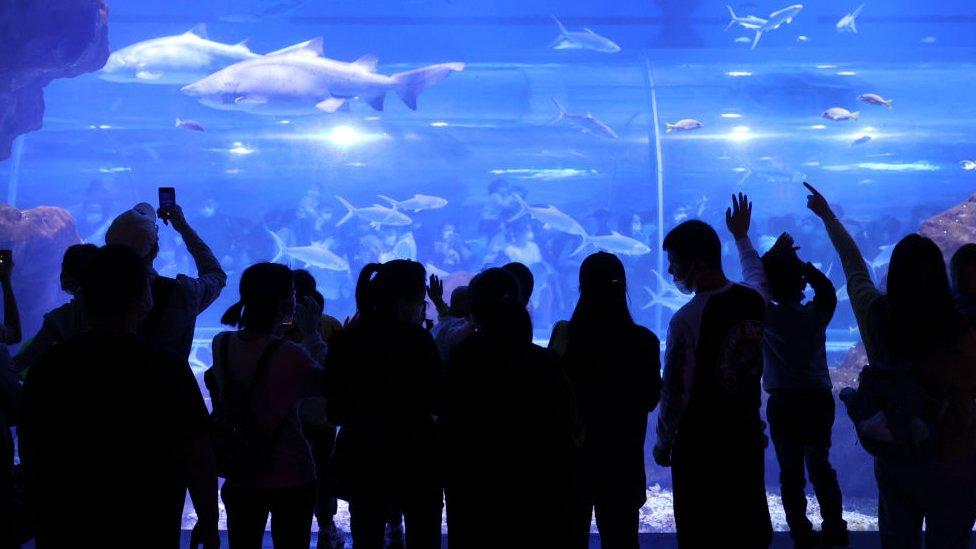 Tourists at Wuhan's aquarium