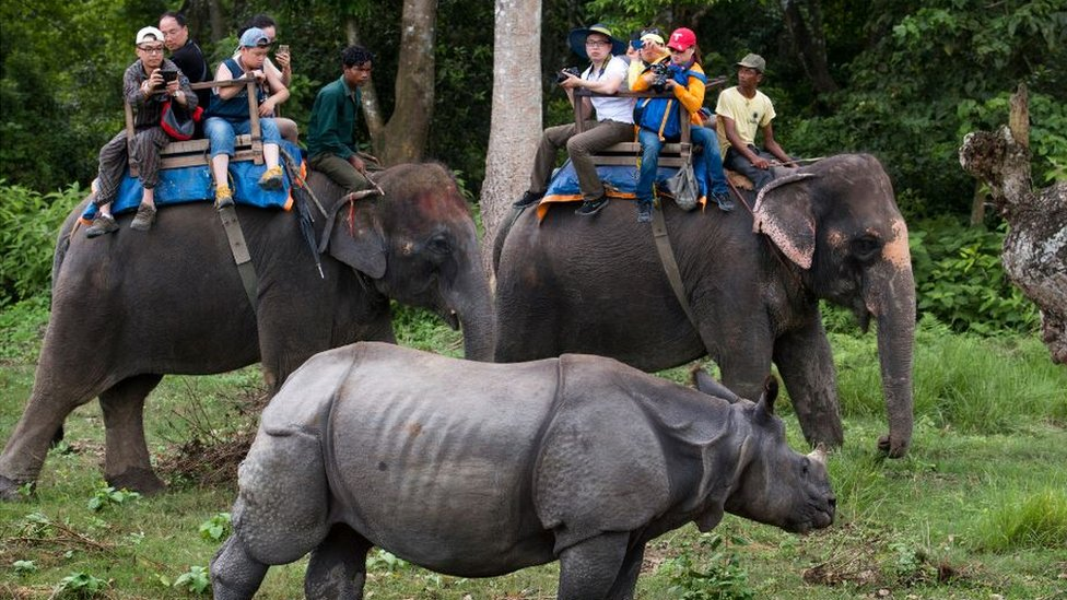 Tourists taking pictures of one horned rhinoceros