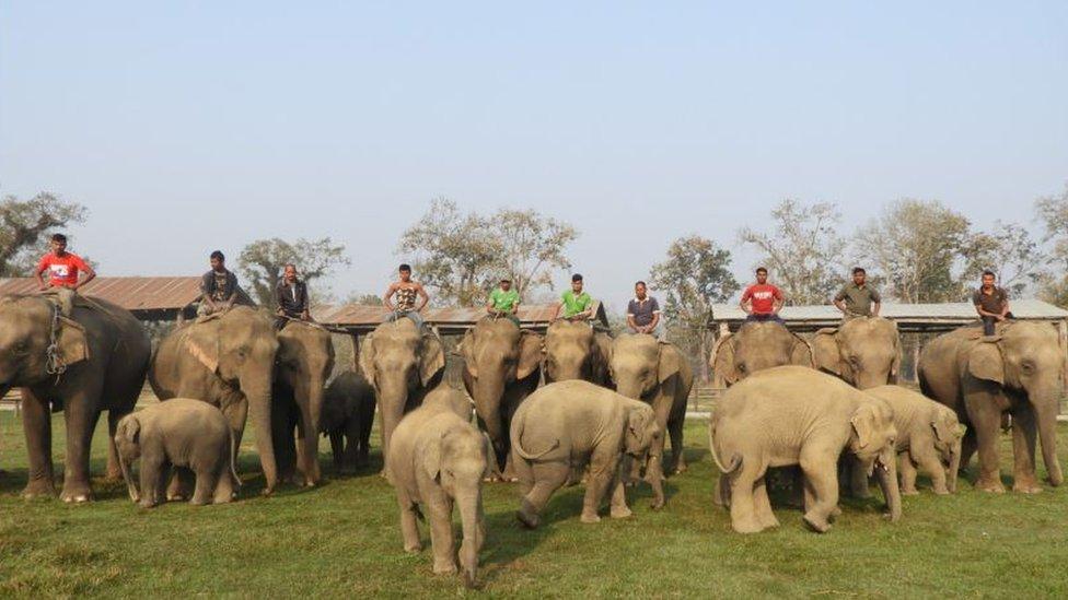 Safari elephants and their calves